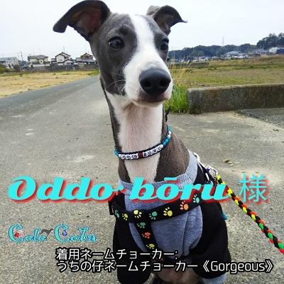 oddo-boru