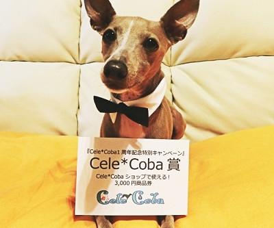 『Cele*Coba 1周年記念特別キャンペーン』やっちゃいます。