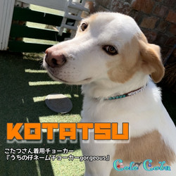 KOTATSUさん