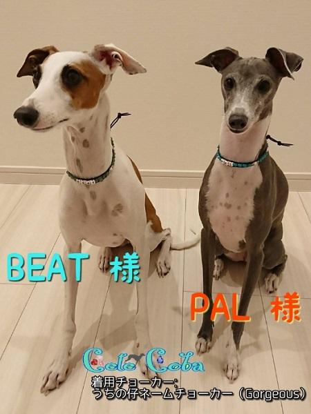 BEAT&PAL