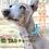 Thumbnail: 金具フリー!ID TAGチョーカー(迷子札)