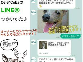 Cele*Coba公式LINEスタート!