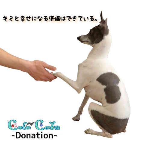 Cele*Coba -Donation-