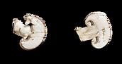 champignons 1.png