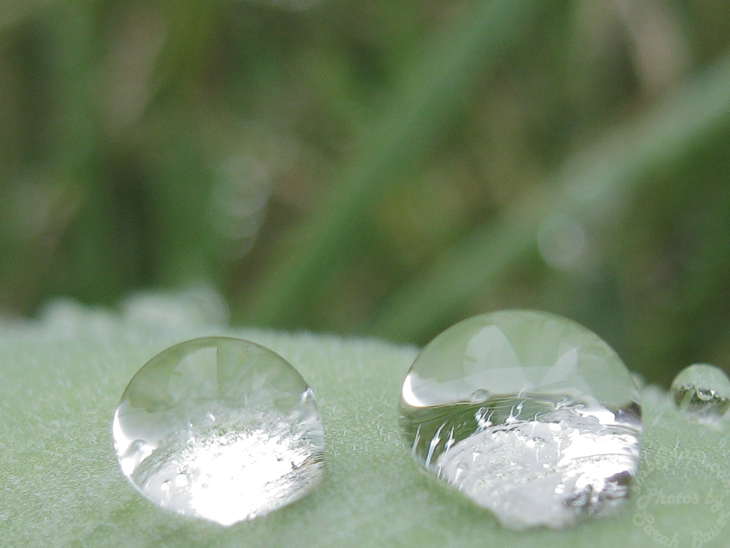 Two Raindrops