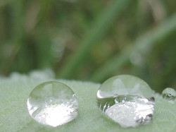 Two Raindrops
