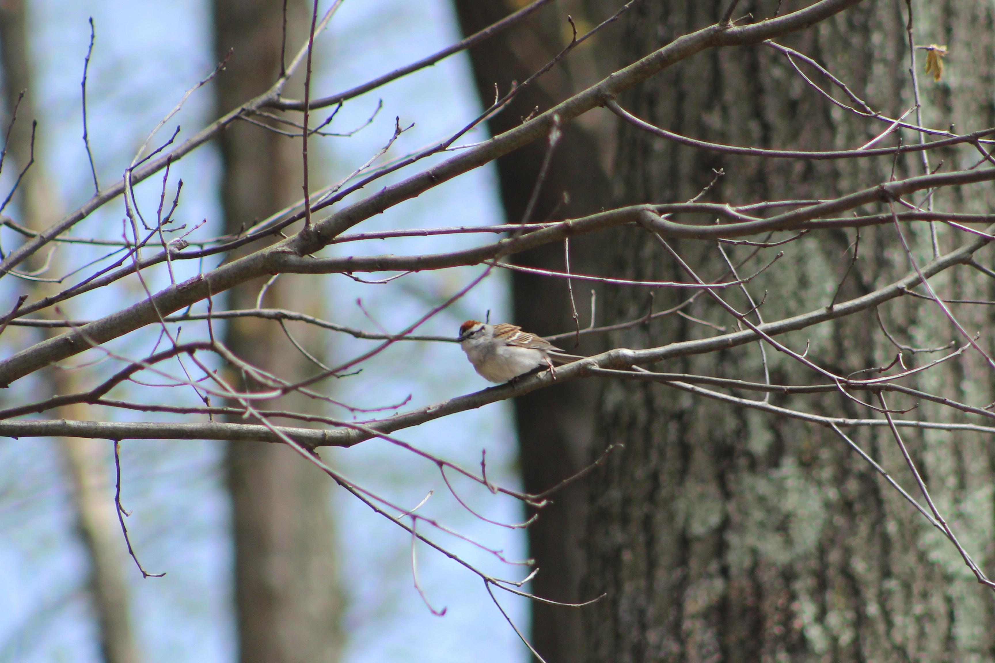 Bird Lean