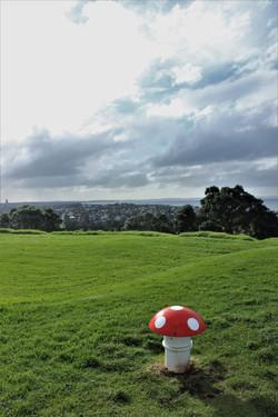 Mushroom Hill