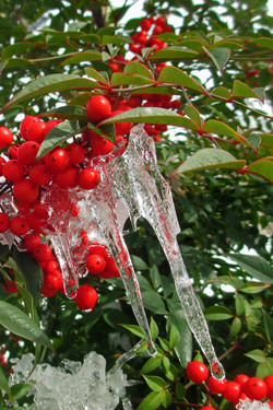 Berry Icicles