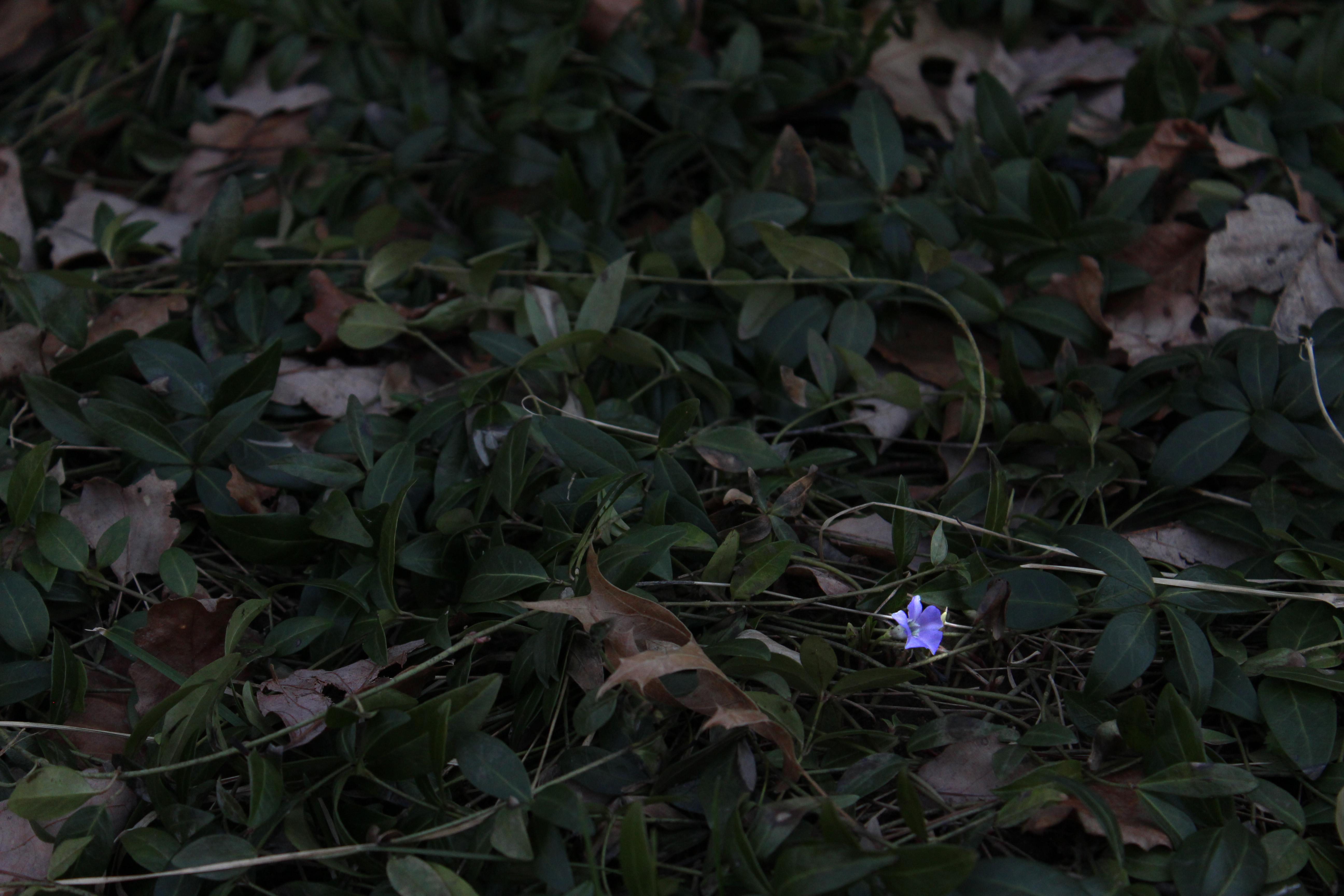 Flower Glow
