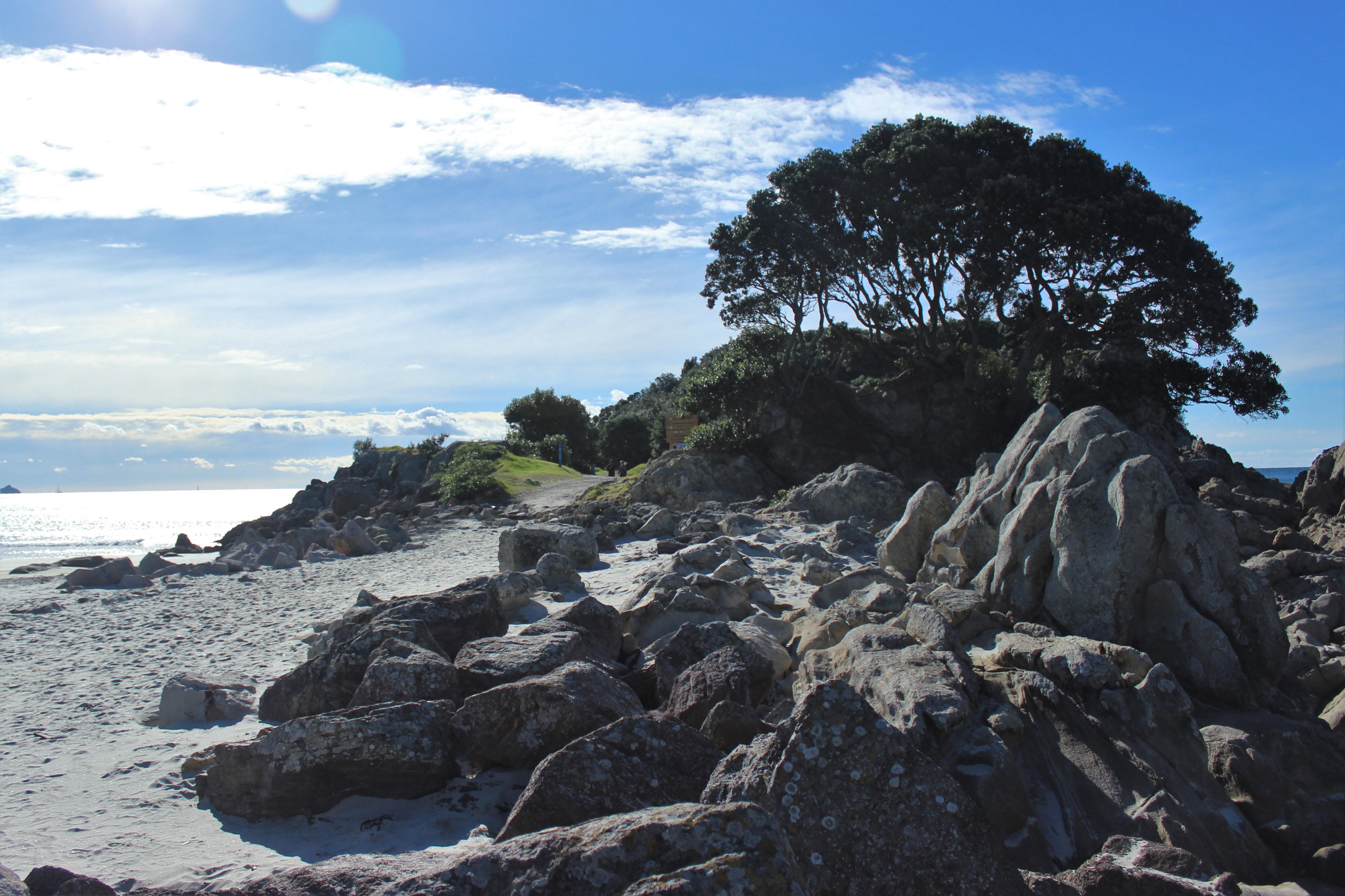Tree Beach 2