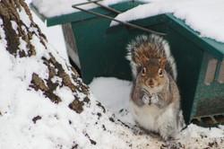 Bird Feeder Squirrel 2