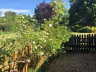 Fence Roses 2020.JPG