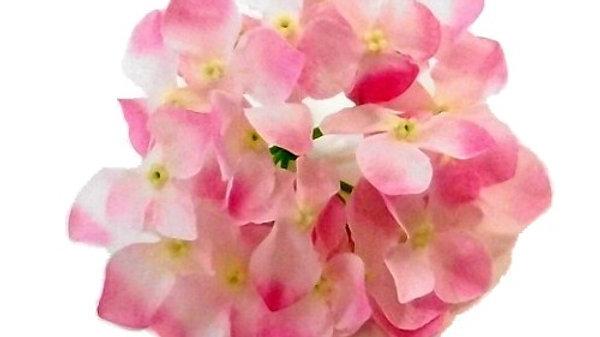 Pink Hydrangea flower heads