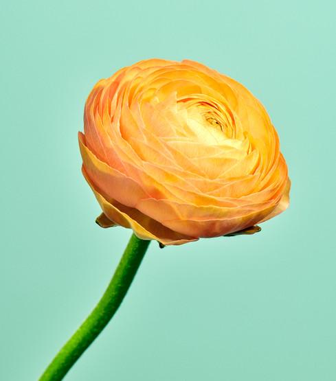 2021_STILL_LIFE_FLOWERS_MARCH3099.jpg