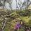 Thumbnail: Floral 4oz Tin