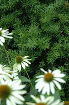 Plant Contrast - Asheville