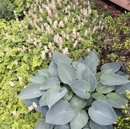 Garden Design Asheville