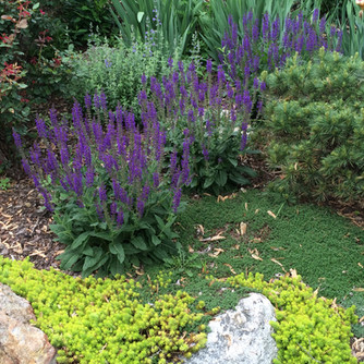 Design Perennials Asheville