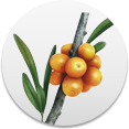 sea-buckthorn-oil.png