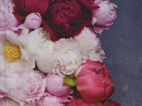 Peonies by Jane Eastoe