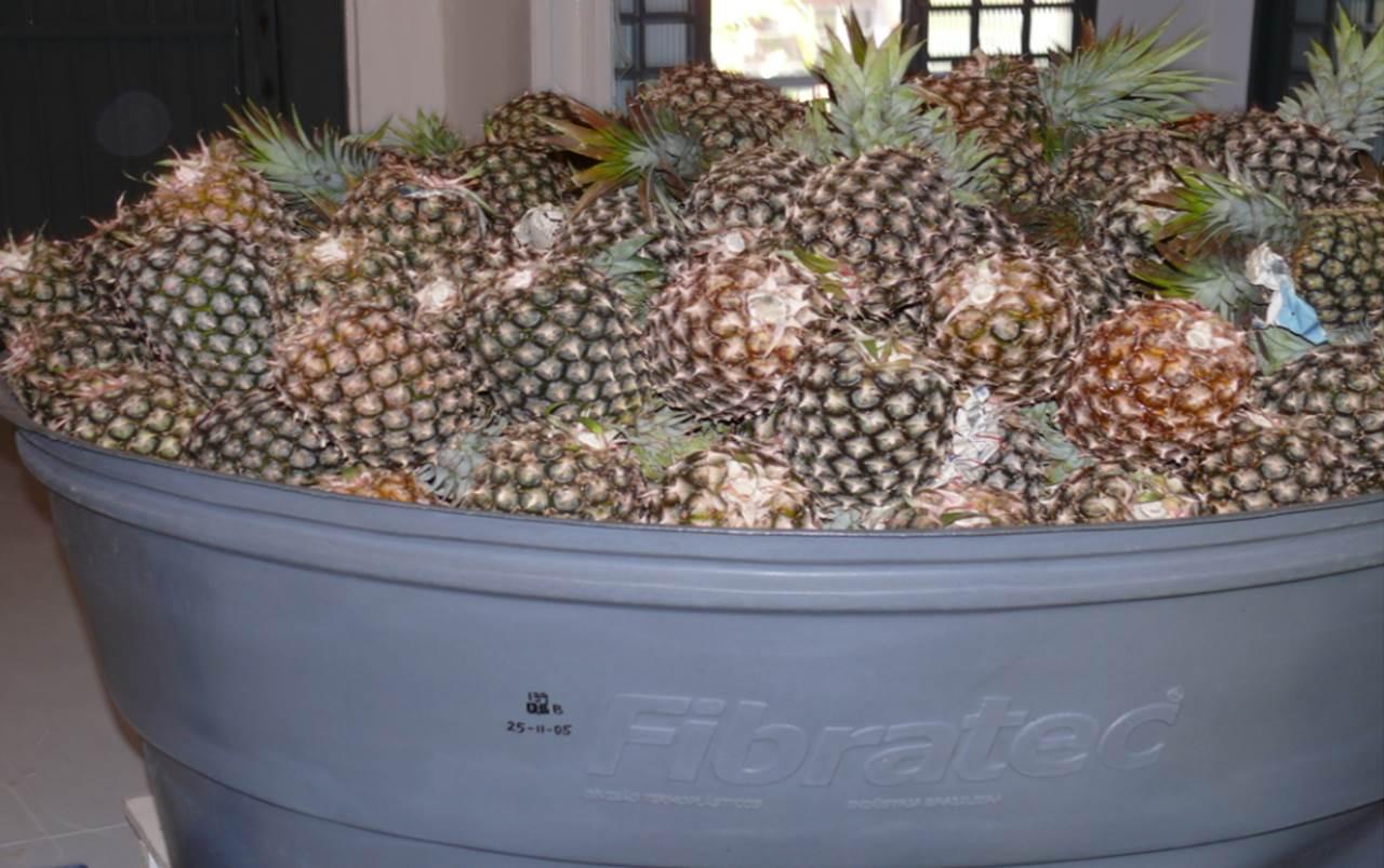 fermentação floranew brasil 12.jpg