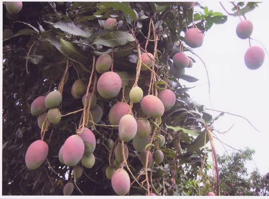 fazenda anew floranew brasil 4.jpg