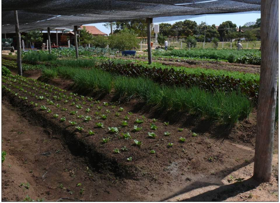 fermentação floranew brasil 10.jpg