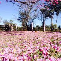 floranew brasil naturevitta 2.jpg