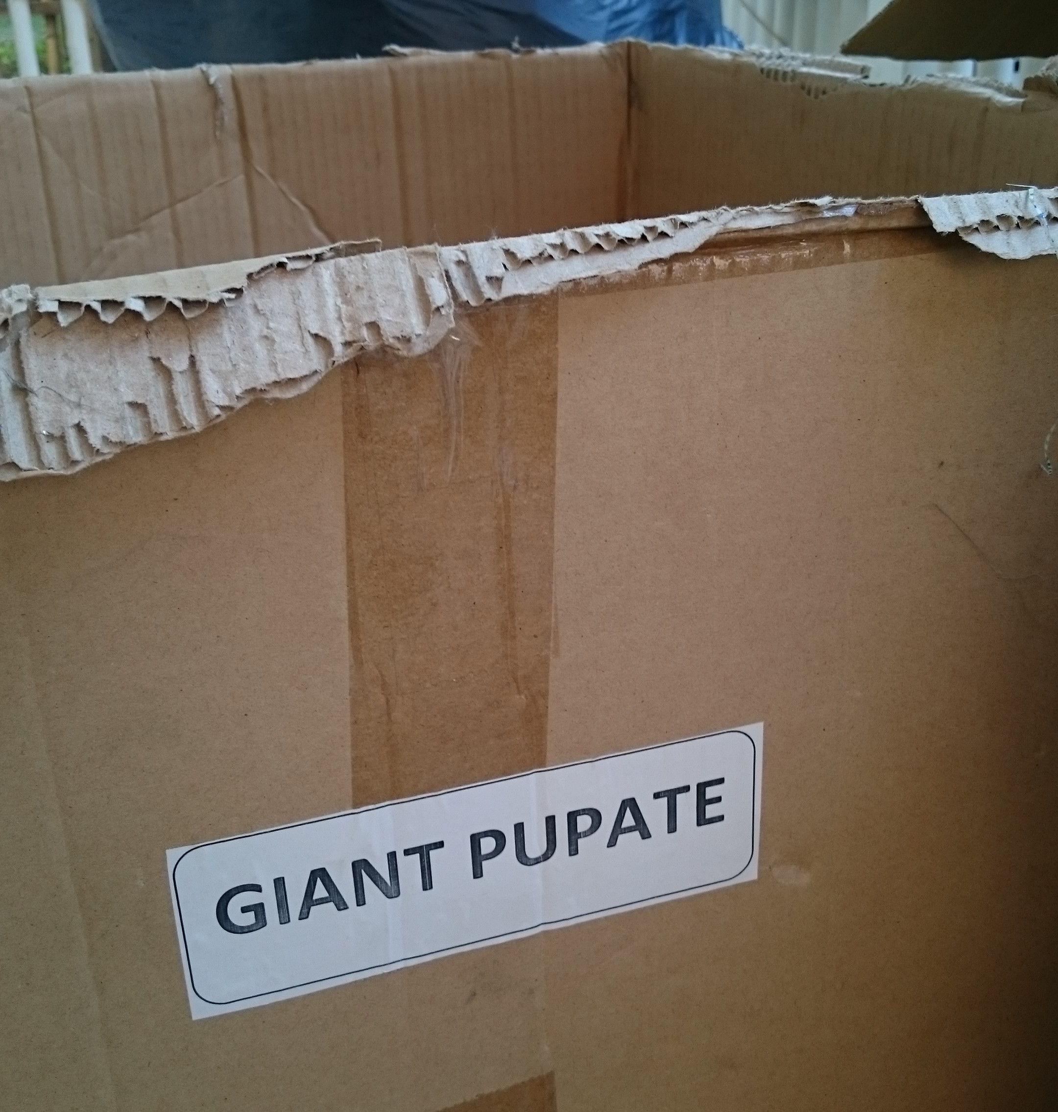 Puppets pupate