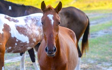 Cabalgatas, Horseback Riding