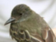 Avistamiento de aves, Birdwatching