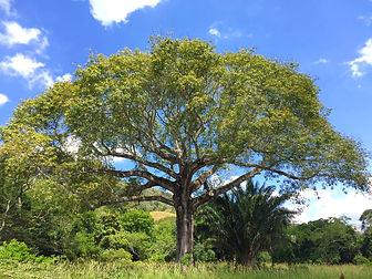 Conservation, Bosque Seco Tropical
