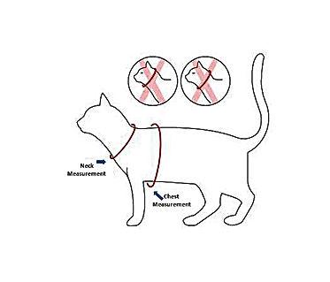 Cat measurement.jpg