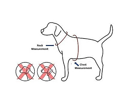 Dog measurementment.jpg