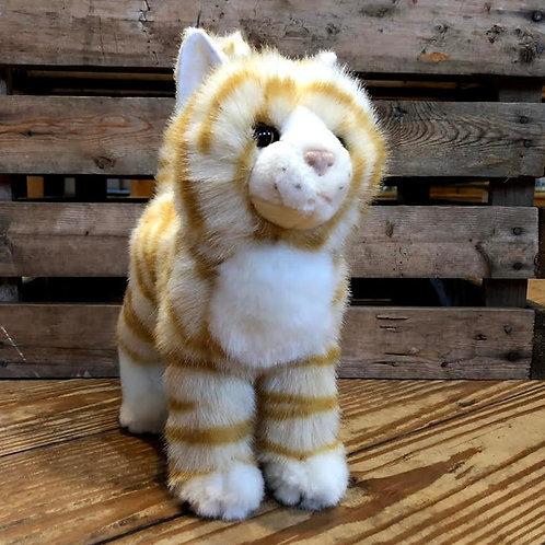 Tiffy Orange Tabby Cat
