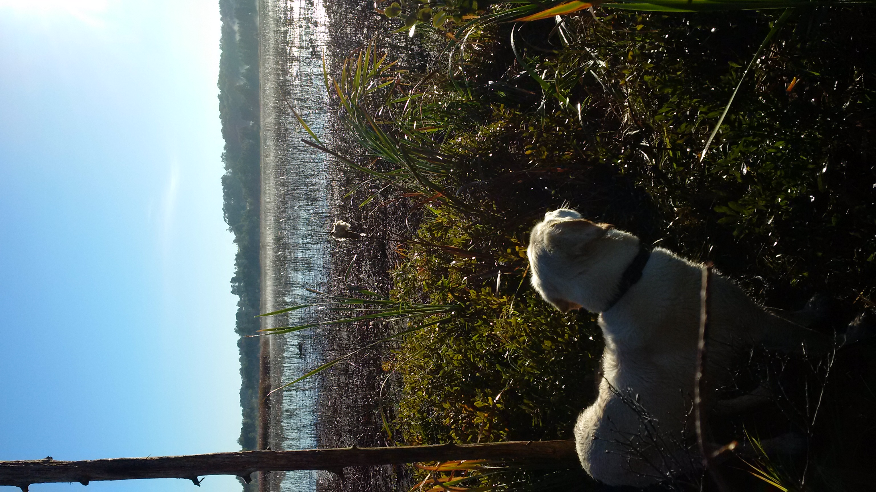 Watching the Marsh