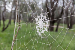Webs Within Community