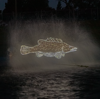 Cod Projection-2MP-for-web.png