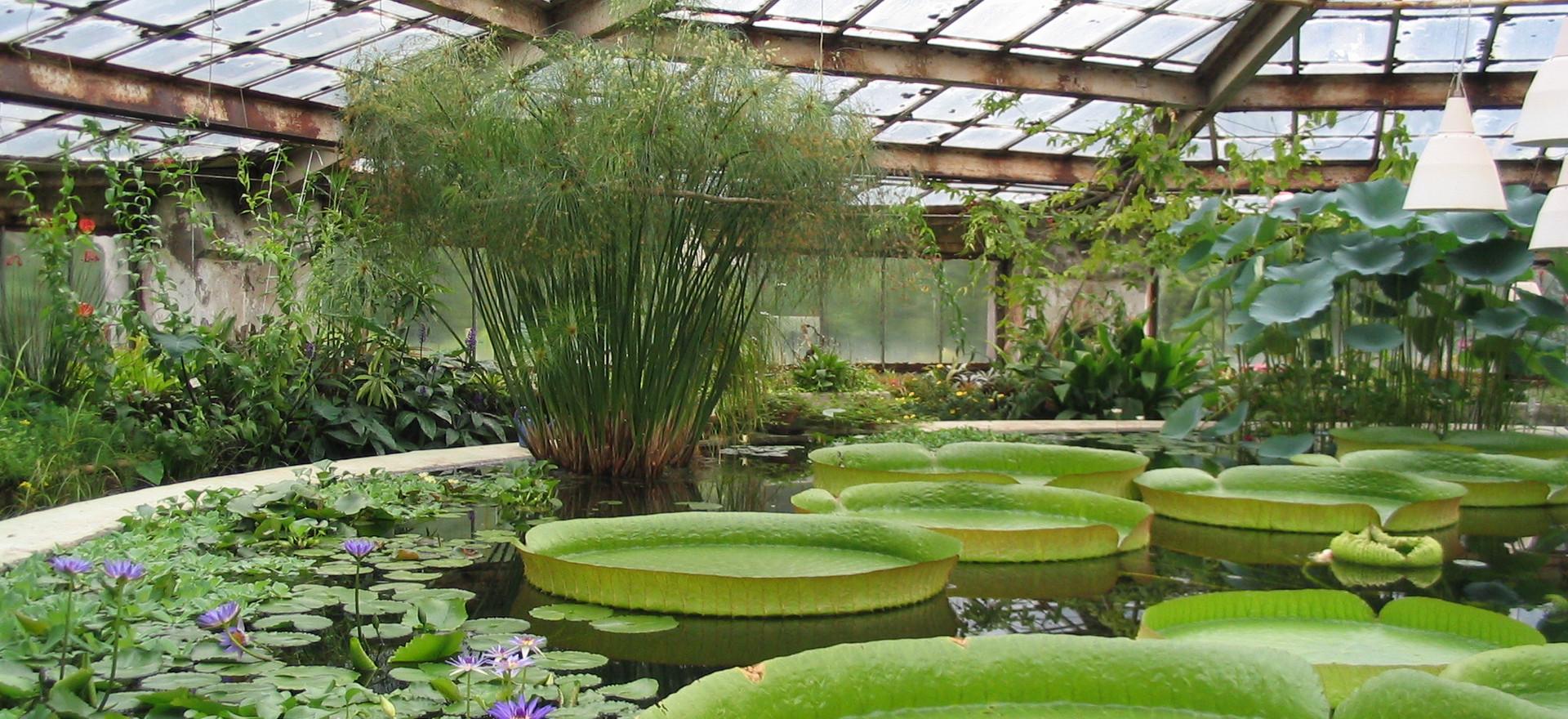 Botanical_Garden_V.L._Komarov_Botanical_