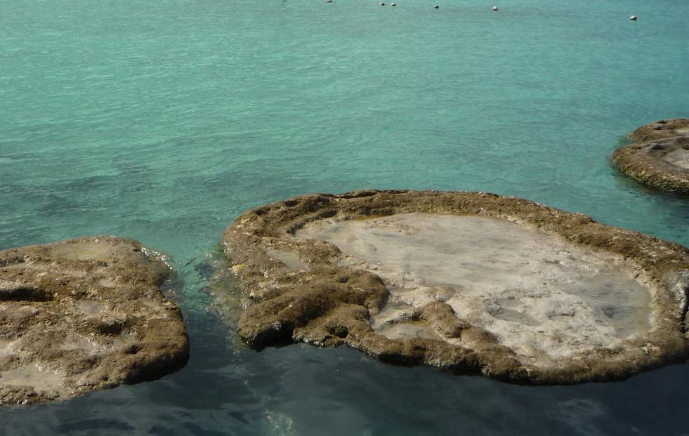 13 - Cenote Cocalitos - Stromatolites - Bacalar