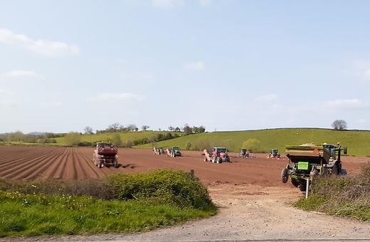 A fleet of tractors sowing potatoes