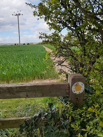 A footpath across a field