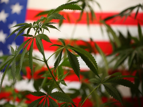 What Does Legalization of Marijuana in New York Mean for Employees and Employers?