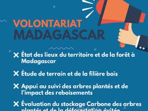 [Ouvert] Volontariat - Diagnostic forestier & Mesure d'impacts dans la zone du projet Antalaha