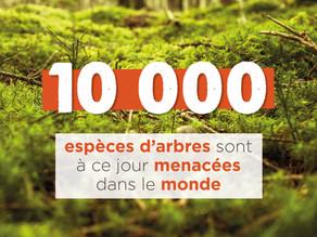 Comment agir pour la survie des arbres menacés ?