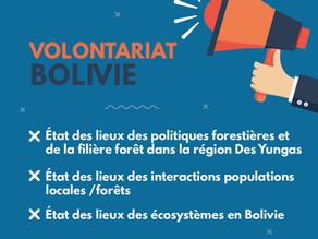 [Pourvu] Volontariat - Diagnostic forestier : Etude de la gestion forestière et de la filière bois