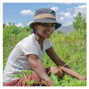 Comment Coeur de Forêt accompagne les producteurs d'huiles sur le projet Antsirabe ?