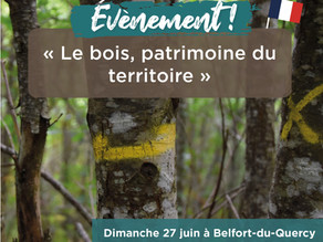 Les bois, patrimoine du territoire : Découverte de l'arbre, jusqu'au geste du menuisier.