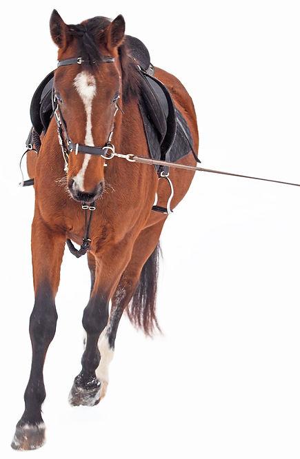 Cj Horse Penz